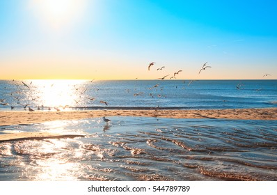 large group of seagulls on the beach