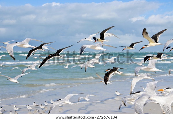 large-group-seagulls-taking-flight-600w-