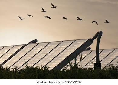 Large group of Solar water heating systems with geese flying by