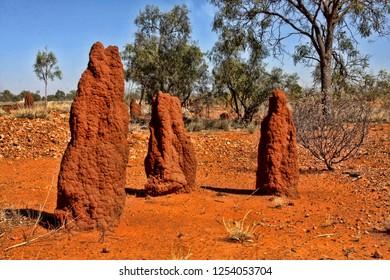 Large group of termites in northeastern Australia