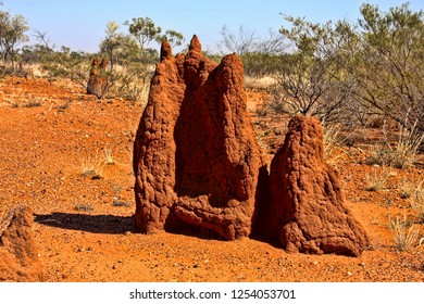 Large group of thermites in northeastern Australia