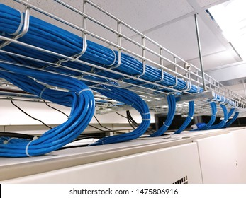 Large group of UTP cables, Ethernet cables in cable tray.