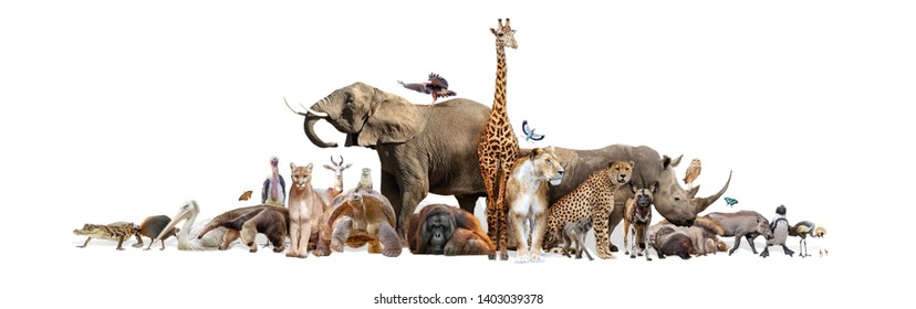 Large group of wild zoo animals together on horizontal web banner with room for text in white space