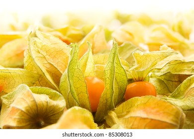 Large group of winter cherries, also known as physalis, ground cherries, cape gooseberries and chinese lanterns