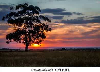 Large Gum Tree at Sunset photographed in Diggers Rest, Victoria, Australia on the 3 January 2017