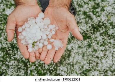 Large hail in human hands on the green grass background.