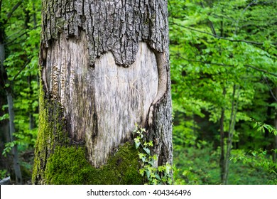 A large heart carved in a tree trunk with vibrant green background.