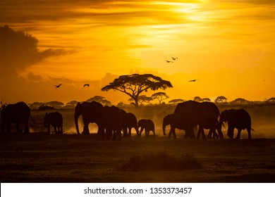 Large herd of African elephants walking through Amboseli, Kenya Africa at golden hour sunset