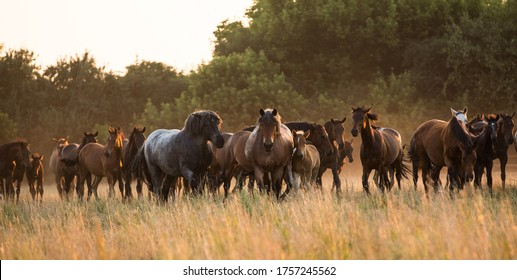 a large herd of wild horses of different ages and colors in a summer meadow in freedom