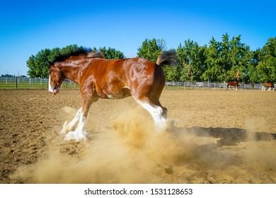 A large horse running around