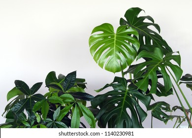Large houseplants on the near white wall