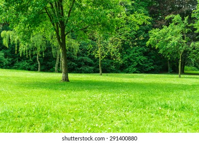 Large lawn with trees