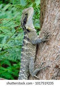 Large lizard on a tree