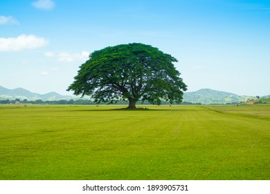 A large lonely tree in the grassy field