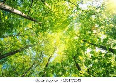 Large, lush tree tops soar into the sky.