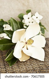 A large Magnolia bloom with Dogwood blooms in background, shallow depth of field, copy space