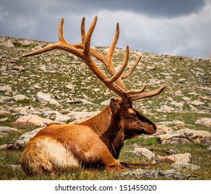 Large male Elk, sitting in the sun , high elevation, rocky mountains