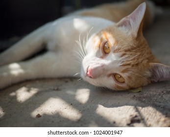 A large male tabby cat looking at the camera.