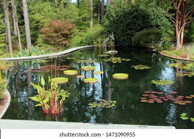 A large man made pond filled with various water lily pads and water plants surrounded by forest in Durham, North Carolina, USA