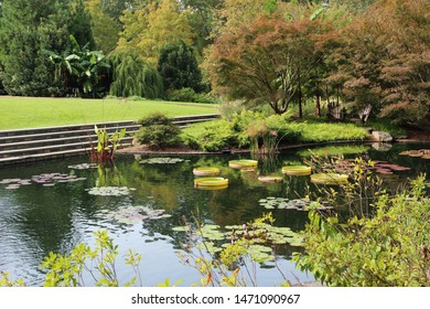 A large man made pond filled with various water lily pads and water plants surrounded by manicured lawn and forest in Durham, North Carolina, USA
