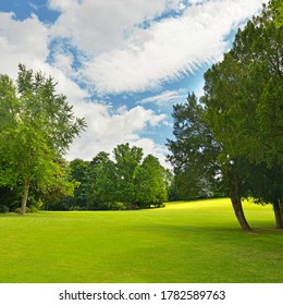 Large meadow in beautiful summer park