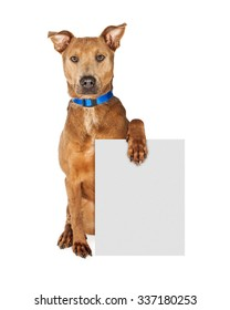Large mixed breed dog wearing a blue collar sitting and looking forward while holding a blank sign to enter your message onto