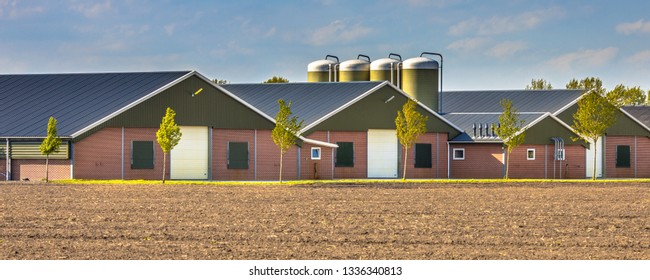 Large modern barns in agricultural landscape in the Netherlands