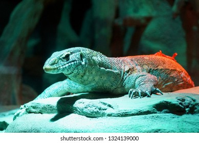 a large monitor lizard sits on stones and sand in green light