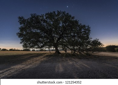 A large moonlit oak tree with Jupiter rising.