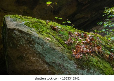 Large mossy rock in a cave