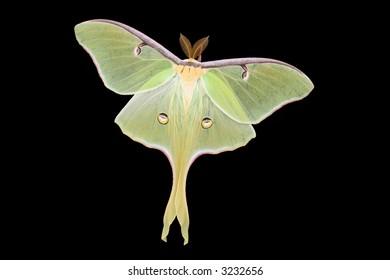 Large moth on black background