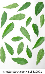 A large number of green foliage are spread on a white background.