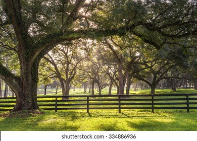 Large oak tree branch with farm fence in the rural countryside at a farm or ranch looking serene peaceful calm relaxing beautiful southern tranquil