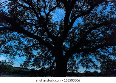A large oak tree is silhouetted against the long exposure star trails of the night sky.