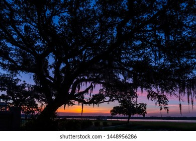 A large oak tree with Spanish moss hanging from it spreading branches is silhouetted by a dramatic sunrise sky in Beaufort in the South Carolina Low Country.