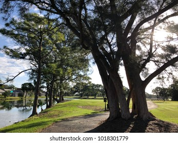 large oak trees on a golf course