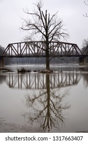 Large Old Tree in Middle of Flooded River with Railroad Bridge in Background - Fortitude in Solitude