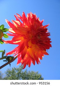 large orange flower
