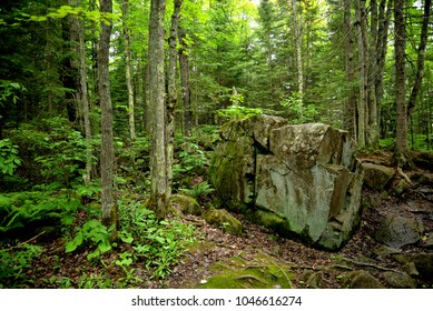 A large outcropping tucked away in the forest.  Surrounded by trees out in the middle of nowhere.