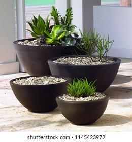 Large oval indoor flower pots. Big pots for indoor or garden flowers. Garden flowers for for exterior and small front yard. Echeveria succulent in flower pot