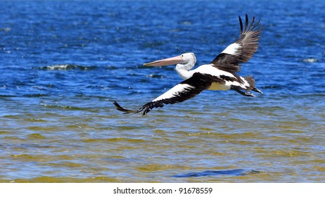 Large Pelican flying over water.