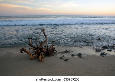A large piece of driftwood sits on a beach at sunset.