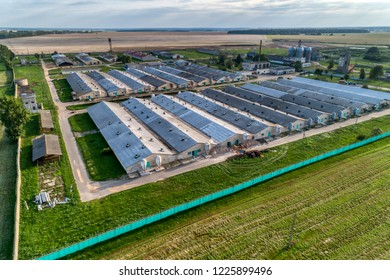 Large pig farm. Evening shooting. Aerial view