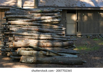 a large pile of firewood lying in the middle of the countryside in the summer in the grass. High quality photo