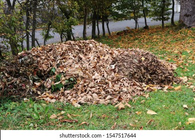 A large pile of leaves in autumn in front of a building. In autumn there are lots of foliage