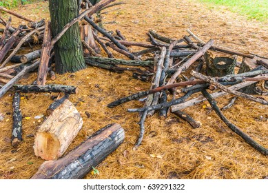 Large pine branches cut in the park.