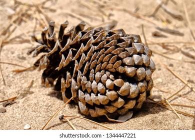 A large pinecone in Cruz de Juanar in Spain