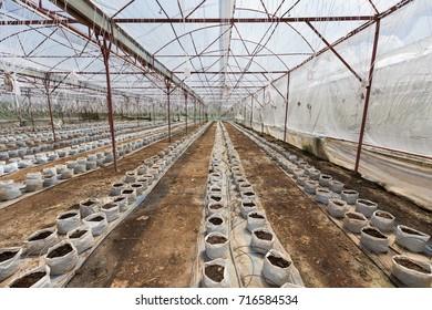 A large plant nursery