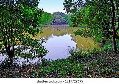 Large pond among the lush foliage of Bang Kachao, the green lung of Bangkok, Thailand