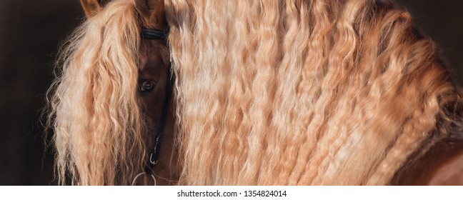 large portrait of the eyes of a horse in a long mane, horse detail